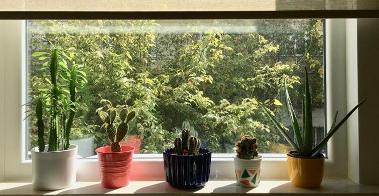 Evde Canlı Çiçek Bakımı Nasıl Yapılır? - 1