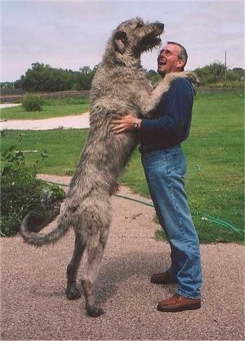 Özel Yeteneklere Sahip 10 Korkusuz Köpek Türü - 1