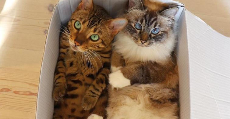 Mutluluk Seviyenizi Arttıracak 7 Yaramaz Kedi Fotoğrafı - 1