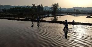 Konuralp Pirincinin Tarladan Sofraya Yolculuğu Başladı - 1