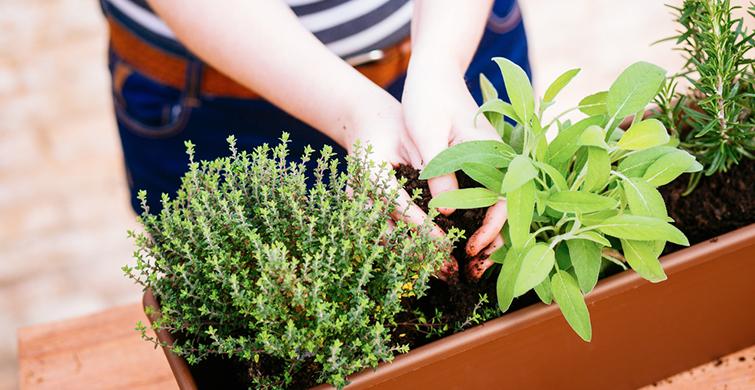 Kışın Saksıda Yetiştirebileceğiniz Sebzeler - 1