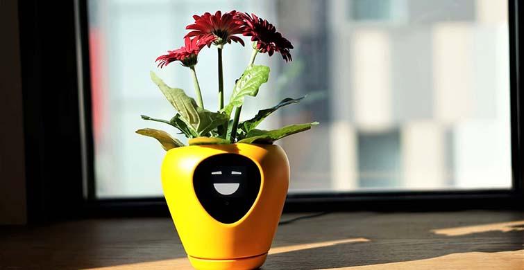 Çiçeklerin Konuşturan İlginç Tasarım - 1