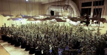 Avcılar'da 88 Kök Uyuşturucu Ele Geçirildi: 1 Gözaltı
