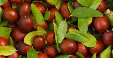Hünnap Meyvesi Nasıl Tüketilir?