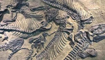 70 Milyon Senelik Dinozor Kalıntıları Keşfedildi