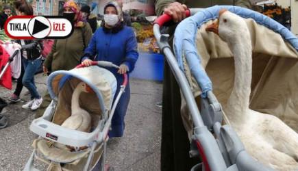 Bebek Arabasındaki Kazı Görenler Hayrete Düştü