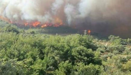 Bakan Pakdemirli'den İskenderun'daki Yangın İçin Açıklama!