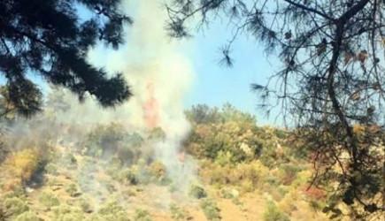 Muğla'da Zeytinlikte Yangın Çıktı