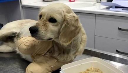 Yavru Köpek Pamuk'un Kollarını Kesilmişti! Mahkeme Şüphelileri Serbest Bıraktı