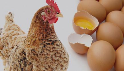 Yumurta Fiyatları Altını Solladı