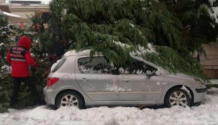 Zonguldak'ta Ağaçlar Otomobillerin Üzerine Devrildi