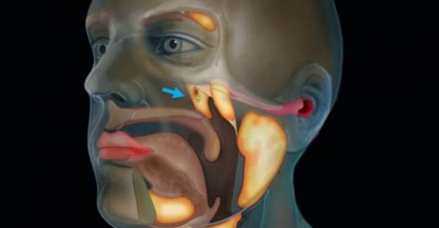 Bilim İnsanları Kafatasında Yeni Organ Keşfetti