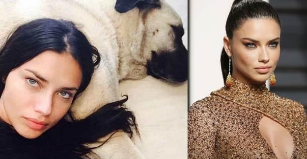 Sivas'tan Adriana Lima'ya 'Kangal Gönderebiliriz' Mesajı