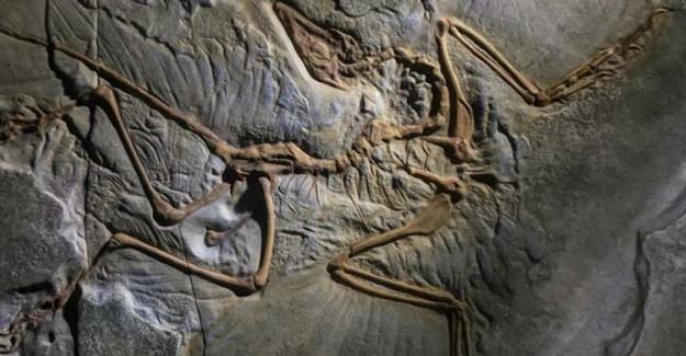 127 Milyon Yıllık Kuş Fosili Bilim Dünyasını Heyecanlandırdı