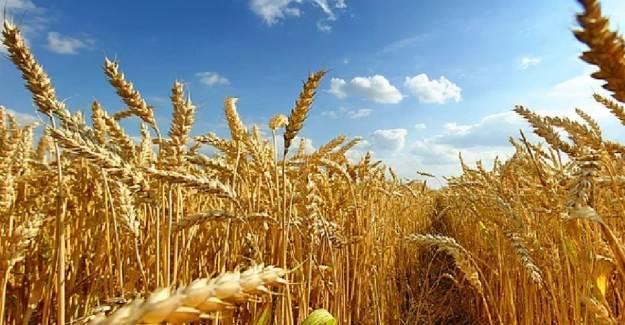 2 Bin TL'nin Altında Tarım Desteği Olmayacak!