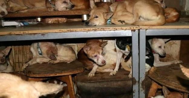 30 Metrekarelik Evden 164 Köpek Çıktı