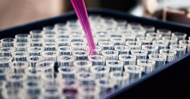 ABD'de Durdurulan Aşı Çalışmalarına Devam Edilecek