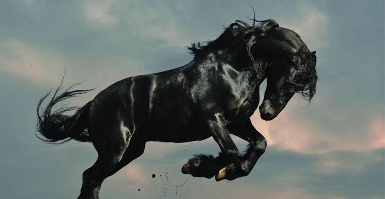 ABD'de Kovid-19 Sebebiyle At İlacı İçenler Artıyor!