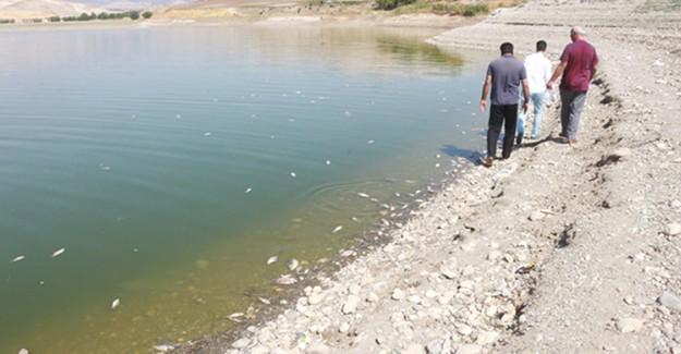 Adıyaman'da Balık Ölümleri Korkuttu