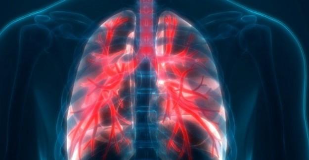 Akciğeri Temizleyen Besinler