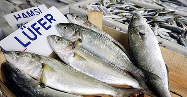 Av Yasağı Kalktı, Balık Fiyatları Yarıya İndi