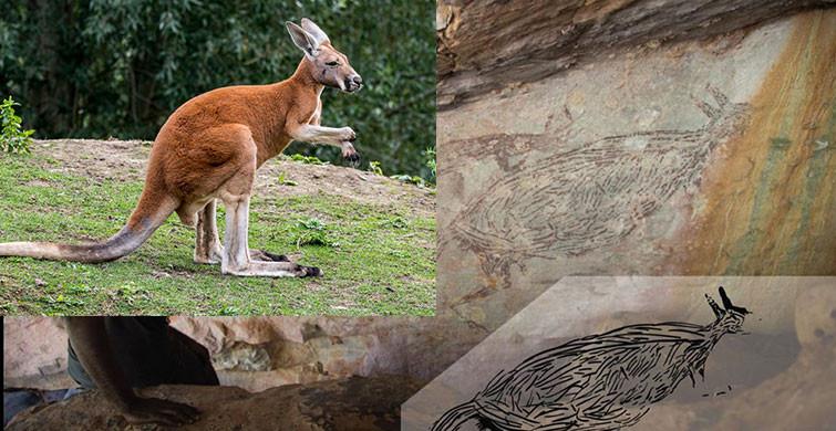 Avustralya'da 17 bin 300 Senelik Kanguru Çizimi Keşfedildi