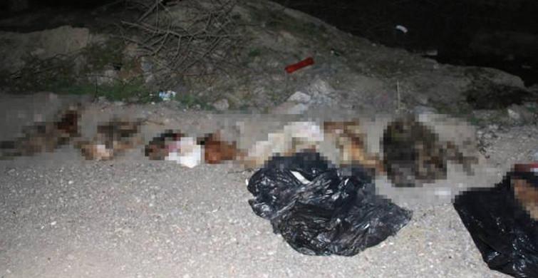 Başkent Ankara'da Çöplükte Çok Sayıda Köpek Bulundu