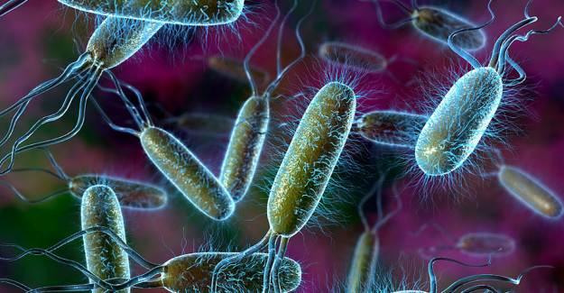 Bilim İnsanları Bakterilerin Ölüm Çığlığını Keşfetti