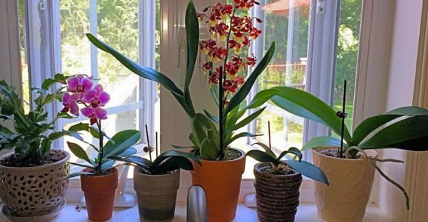 Bulunduğu Ortamın Havasını Değiştiren Bitkiler
