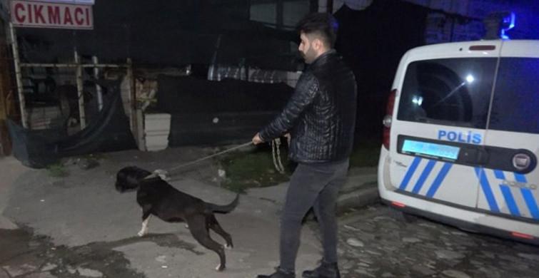 Bursa'da Tecavüz Girişiminde Bulunan Adamı Pitbull Yakaladı