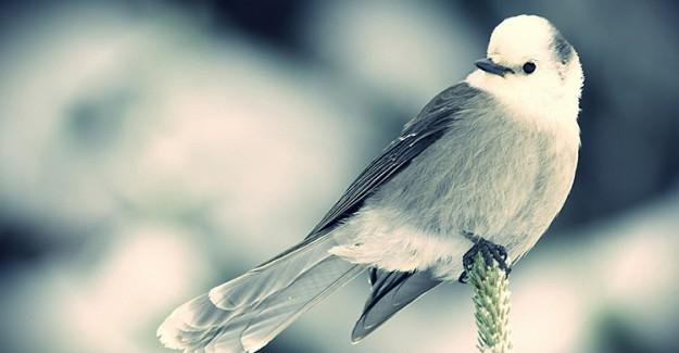 Cenneti Bir Kuşla Satın Almak