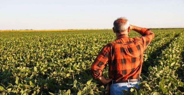Çiftçilerin Yüzünü Güldürecek Haber Geldi! Destek Ödemeleri Başlıyor