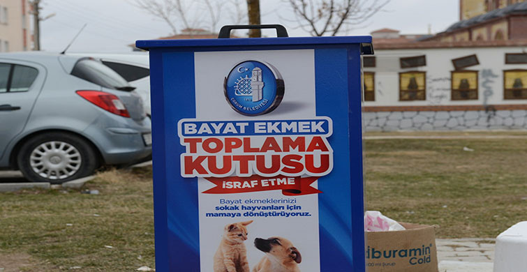 Çorum Belediyesi Hayvan Severleri Sevindirdi!