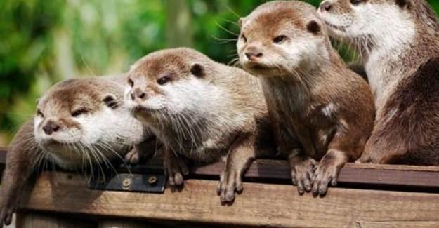Danimarka 17 Milyon Hayvanı Katledecek