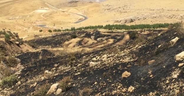 Deyrulzafaran Manastırı'na Ait Zeytinlikler Yandı: 700'e Yakın Ağaç Kül Oldu