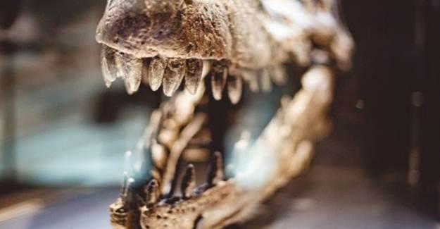 Dinozor İskeletindeki Çalışmalar 150 Yılda Tamamlandı