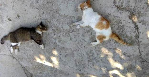 Edirne'de Kedi ve Köpekler Zehirli Etle Öldürüldü