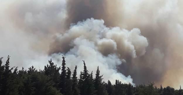 Edirne'de Korkutan Orman Yangını
