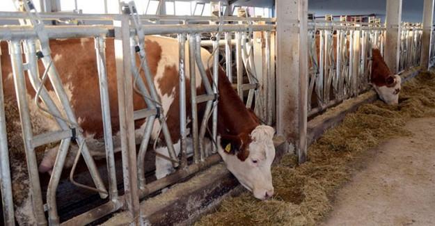 Et ve Süt Kurumu Et Alım Fiyatında 2 Liralık Artışa Gitti