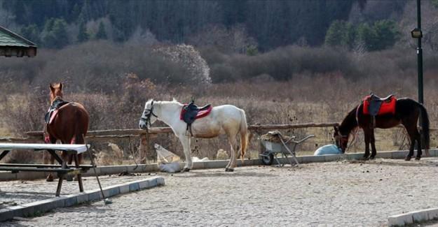 Fatih Metin: 'Abant'ta Atların Karantinaya Alınması Rutin Bir İşlem'