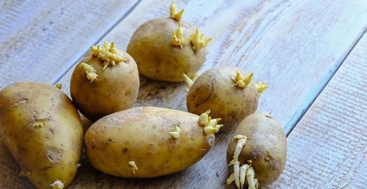 Filizlenen Patatesin Zararları