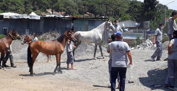 İBB'nin Kayıp At Skandalına İlişkin Bir Kişi Görevden Alındı