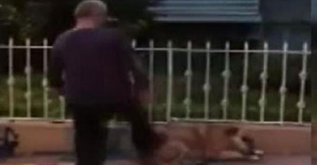 İstanbul'da Köpeği Tekmeleyen Şahsa Bin 763 Lira Para Cezası Kesildi