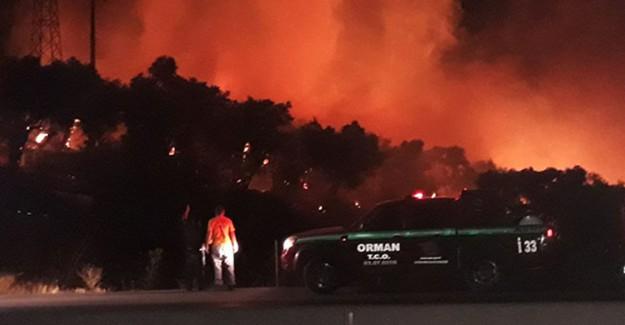 İzmir'de Zeytinlik Alanda Korkutan yangın