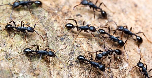 Karınca Uzaklaştırıcı Yöntemler!