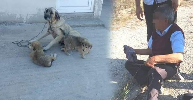Kocaeli'de Yaşlı Adam Köpeğe Tecavüz Etti Sonra Serbest Bırakıldı