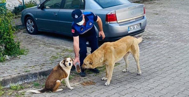 Kocaeli'nde Tam Kapanma Sürecinde Sokak Hayvanları Unutulmadı