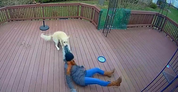 Köpek ve Sahibi Arasındaki Gülümseten Oyun