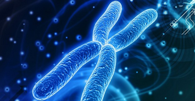 Kromozom Nedir?