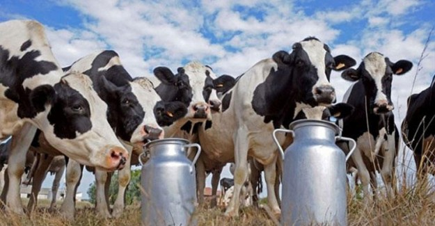 Küçük Ölçekli Süt Üreticisi Destek İstiyor